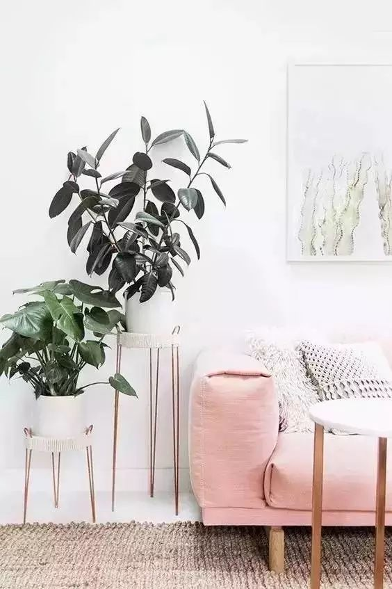 室内绿植养护,你必须知道这些...... | 花草课堂