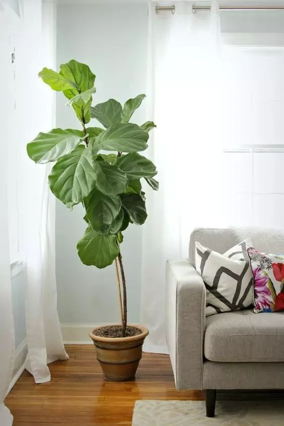 10种室内绿植,好养又好看
