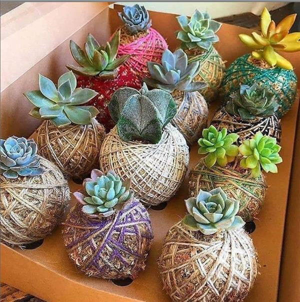 This is what succulent plants should look like!